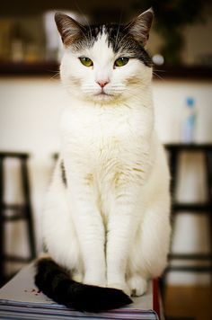 Pearl | Flickr – 相片分享! #cat