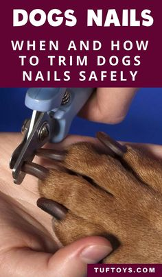 dog learning,dog tips,dog care,teach your dog,dog training Dog Health Tips, Pet Health, Trimming Dog Nails, Durable Dog Toys, Dog Grooming Tips, Dog Information, Dog Care Tips, Pet Care, Puppy Care