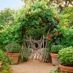 Cut grapevines are woven into a naturalistic fence, garden gate, and arch that support 'Joseph's Coat' climbing roses and 'Roger's Red' grapevines that have broad heart-shaped leaves. | Photo: Marion Brenner | thisoldhouse.com