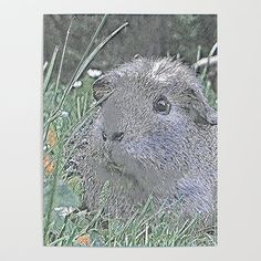 Animal ArtStudio 1519 Guinea Pig Poster by mehrfarbeimleben Blank Walls, Diy Frame, Cool Diy, Guinea Pigs, High Quality Images, Art Studios, Vibrant Colors, Smooth, Posters