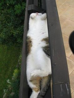 Cats sleeping in odd places