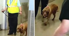 Military Dog Is Torn Away From Beloved Sergeant, Two Years Later She Hears Him Screaming Her Name http://www.hangovernews.com/military-dog-is-torn-away-from-beloved-sergeant-two-years-later-she-hears-him-screaming-her-name/ It's said that a dog is a man's best friend — but it seems safe to say that the bond between CiCi and Army Sergeant Jason Bos is perhaps a bit more special than most. Sergeant Jason Bos and his K-9 partner CiCi spent five years side-by-side in Iraq.