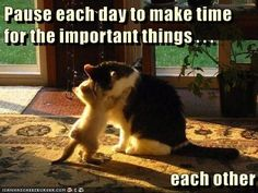 Pause each day to make time for the important things http://cheezburger.com/9040968448