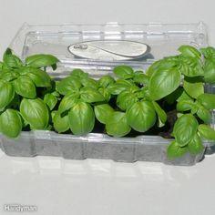 Mini Seed Starters