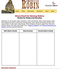 Who do you think does more work in raising young, the robin male or the female? Which robin takes more risks, the male or the female? Which robin would you rather be: a male or female? Chore Chart for Raising Robins
