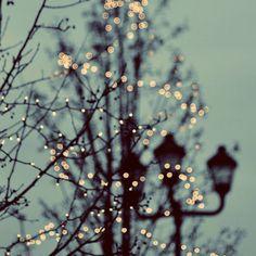 Christmas lights at dusk are beautiful! #indigo #magicalholiday
