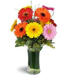 Check out this arrangement: Daisy Rainbow™! Gerbera Daisy Bouquet, Seeded Eucalyptus, Gerber Daisies, Over The Rainbow, Flower Arrangements, Floral Arrangement, Clear Glass, Happy Birthday, Bloom