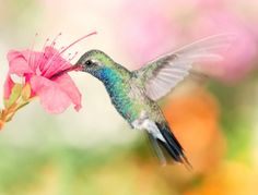 Hummingbird are one of Gods most amazing creations!
