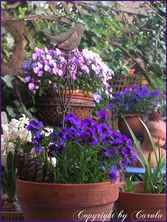 Photo by Carola from her blog, WELCOME TO BOXWOOD COTTAGE