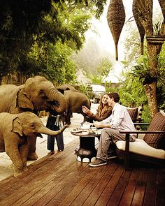 Four Seasons, Thailand. The elephants just roam around the property. SOOOOOO going here.