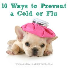 Natural Ways to Prevent the Cold or the Flu PrimallyInspired.com