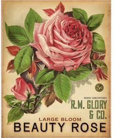 vintage botanical graphics: Flower Seed Catalogs