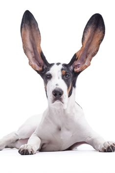 Try Springtime Supplements for dogs, horses, and people. Horses And Dogs, Natural Supplements, Dog Beds, Dog Treats, Spring Time, Goats, Healthy Living, Puppies, Funny