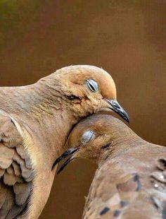 """""""O GRITO DO BICHO"""": Imagem do dia: rolinhas e o amor                                                                                                                                                                                 Mais"""