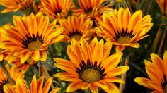 Free stock photo of beautiful flowers bloom blooming
