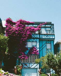San Francisco. My mommy loved the bougainvillea, and while living there whenever I would spot the beautiful climber, in whatever various shade it would remind me of her.