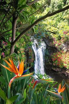 Birds of Pardise & Waterfall, Hawaii, USA