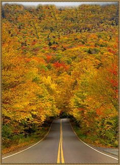 Autumn Tree Tunnel, USA These trees are ablaze with the fiery colors of autumn on a street near Smuggler's Notch, a Vermont State park. The spectacle