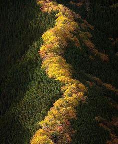 Namego Valley, Tenkaea Mountain, Japan. Photo by @takeshi.wa