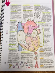 I want my study notes to be this detailed and artsy :) <<< I agree but who the heck writes that tiny? For that matter, who the heck can read writing that tiny? This has absolutely nothing to do with ths boars other than its school notes but. School Organization Notes, Study Organization, Cute Notes, Pretty Notes, Beautiful Notes, Beautiful Pictures, Beautiful Things, Medical Students, Nursing Students