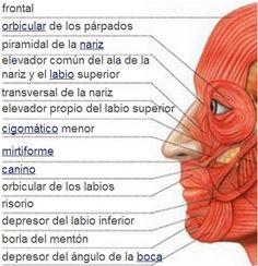 Los dolores en los riñones a los hombres el masaje