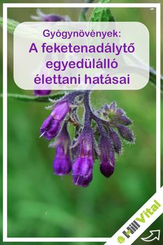 Herb Garden, Herbalism, Health Fitness, Vertigo, Healthy, Nature, Plants, Medicine, Herbal Medicine