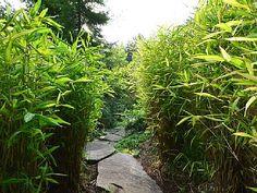 Trail through the Trinidad jungle