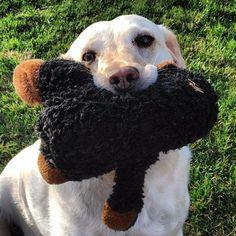 Sage & her monkey. #lab #labrador #retriever #labradorretriever #yellowlab #dog #katanddog