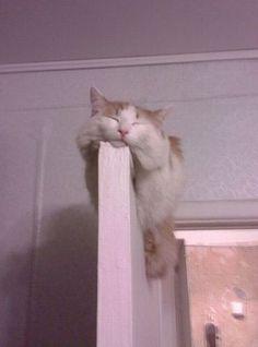 sleeping #cat