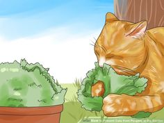 How To Prevent Cats From Pooping In The House
