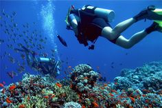 Go diving on Bonaire!