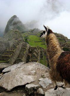 Machu Picchu, Peru. OMG with a llama! I love those animals :P
