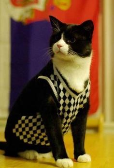 Black snd white cat in a sweater vest