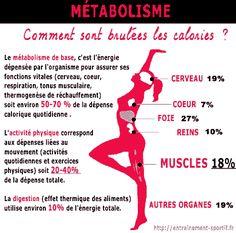 les muscles et le métabolisme de repos