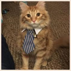 Intern Ready for First Day. #Cute