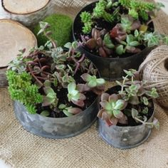 Using galvanized plumbing materials, a succulent garden adds a modern touch to any room.