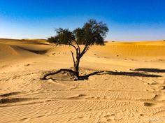 Discover Al Ain, UAE, on Itinera Magica.