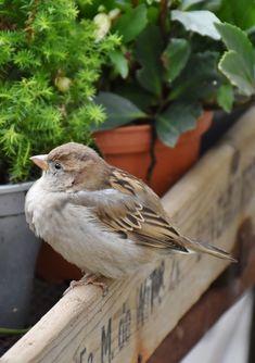A lovely sparrow.
