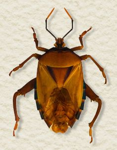 11 Best Regional Bugs of Mobile, Alabama images in 2012