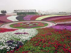 Sparkle Side Up: Dubai Miracle Garden - Largest Flower Garden in the World Topiary Garden, Garden Art, Dubai Tourist Spots, Beautiful Gardens, Beautiful Flowers, Dubai Garden, Miracle Garden, Exotic Plants, United Arab Emirates