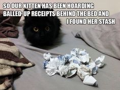 lous-games-win:  hamletwithbears:  sadanduseless:Cat Hoarders The receipt cat is actually a soot sprite.  That last one