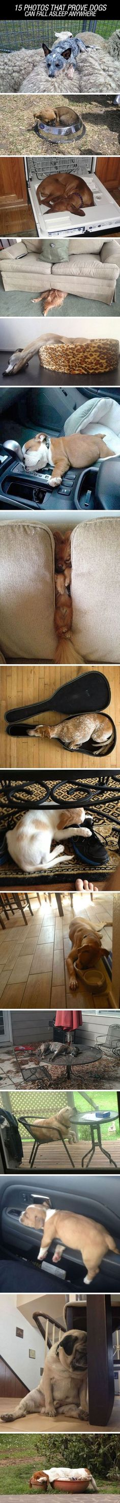 15 Photos That Prove Dogs Can Fall Asleep Anywhere Pictures, Photos, and Images for Facebook, Tumblr, Pinterest, and Twitter