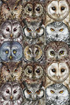 Owl Optics by FarynHughes