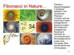 Fibonacci Tuners - Found in Nature
