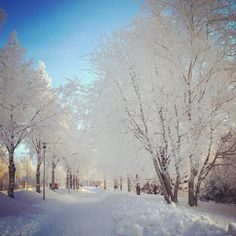 I love when it's sunny, cold and snow is slowly falling covering each branch of the trees :) do you get why the Finnish flag is white and blue? Wwe, How Are You Feeling, Flag, Trees, Snow, Cold, My Love, Winter, Places