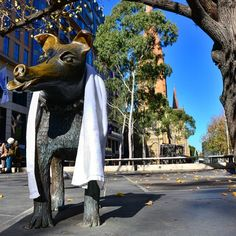 Larry is a frood who really knows where his towel is. #Melbourne #towelday #dontpanic