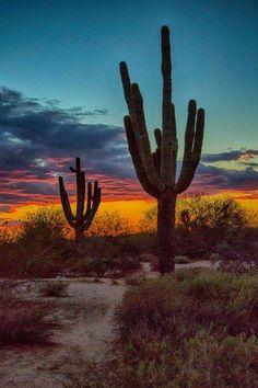 Saguaro at sunset Dec 2015 Beautiful World, Beautiful Places, Beautiful Sunset, Desert Dream, Desert Life, Le Far West, Parcs, Insta Photo, Belle Photo
