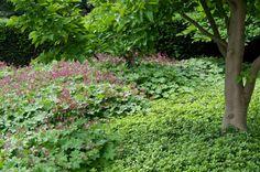 Der Storchschnabel (Geranium macrorrhizum 'Ingwersen') und der ausläufertreibende Ysander (Pachysandra terminalis) bilden schnell dichte Bestände und ergänzen sich großartig Shade Garden Plants, Garden Shrubs, Garden Edging, Garden Borders, Tropical Landscaping, Garden Landscaping, Corner Garden, Trees And Shrubs, Plant Design