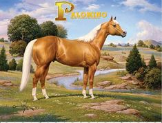 Palomino:)