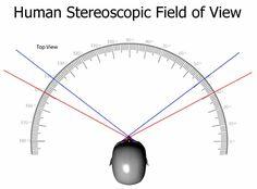 Stereoscopic_Field_of_View.jpg (811×600)